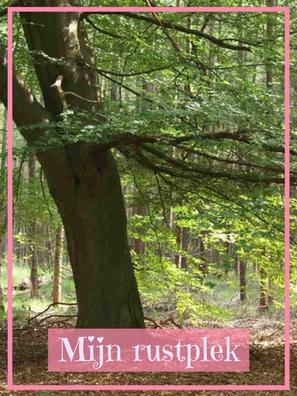 Grote dikke boom.